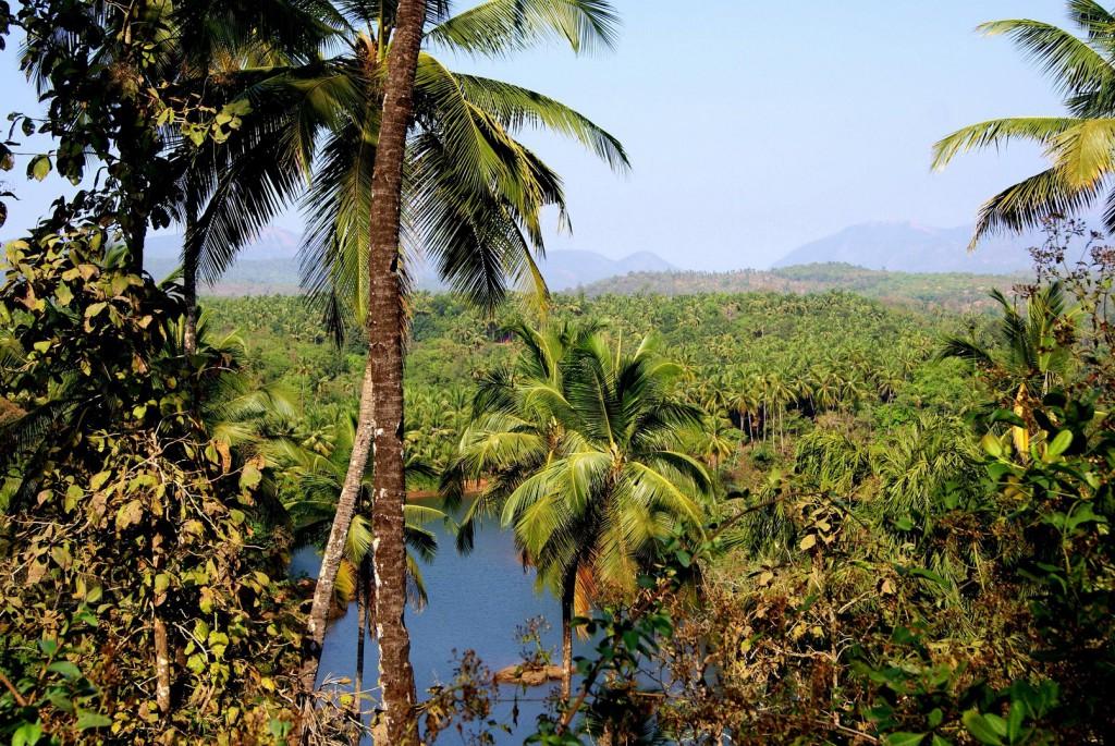 Goa, Dżungla