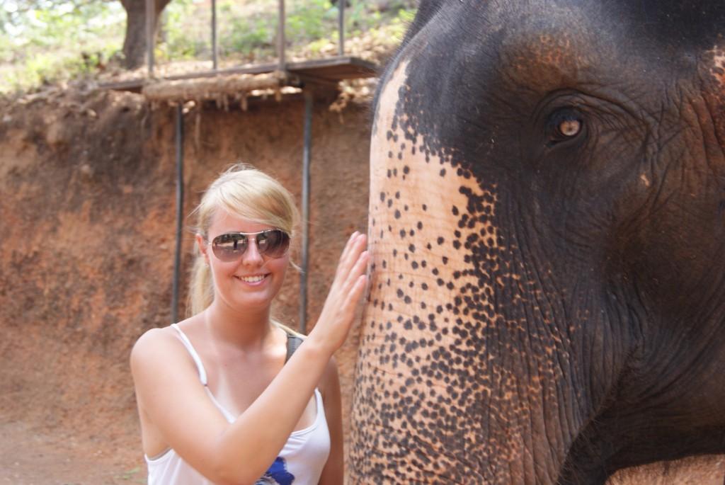 Słoń Goa